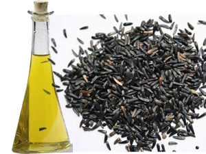 Niger Seed Oil Processing