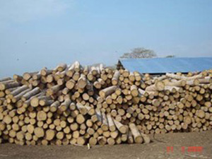 an integrated sawmill and pellet mill project